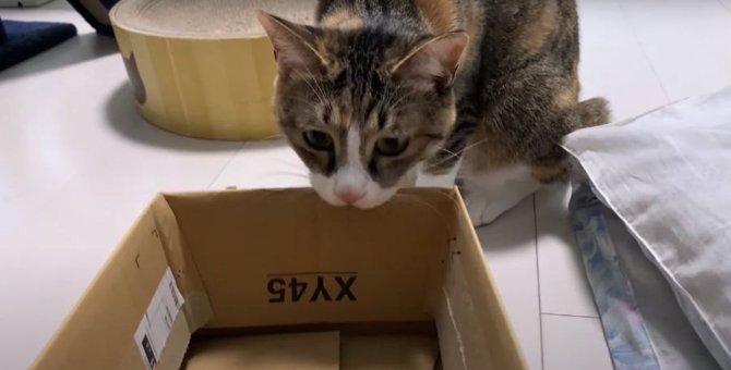 箱に入ってほしかったのに、箱をバリバリかじっちゃう猫さん