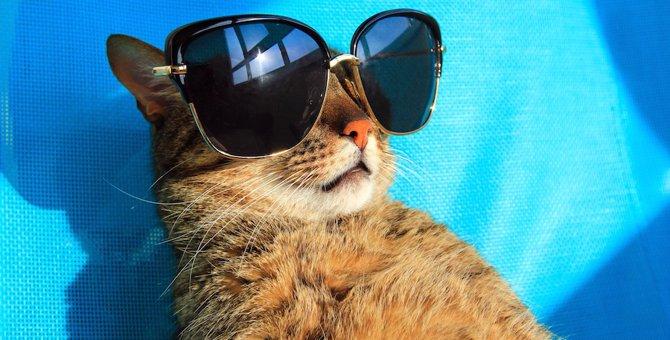 """こんな猫は""""要""""熱中症対策!暑さに特に弱い猫の特徴"""