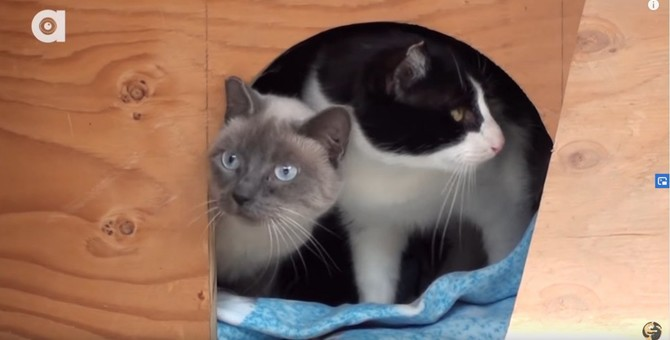 「室内飼育に適さないから」と殺処分される猫を救うプロジェクト