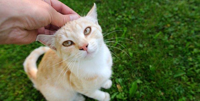 猫がおねだりしている時の3つの仕草