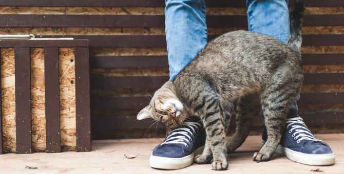 猫のスリスリが激しい2つの理由