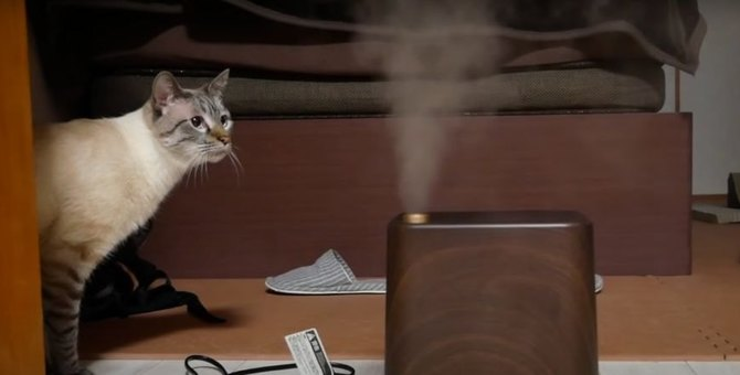 異常を素早く感知!猫ちゃんに秘められた凄い特技とは?