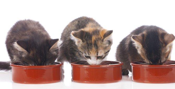 猫の餌入れの種類や選び方