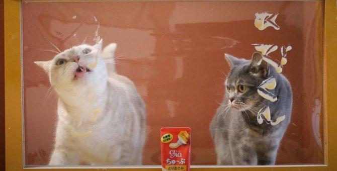 ビニールカーテンにおやつをつけて猫ちゃんを誘ってみた♡