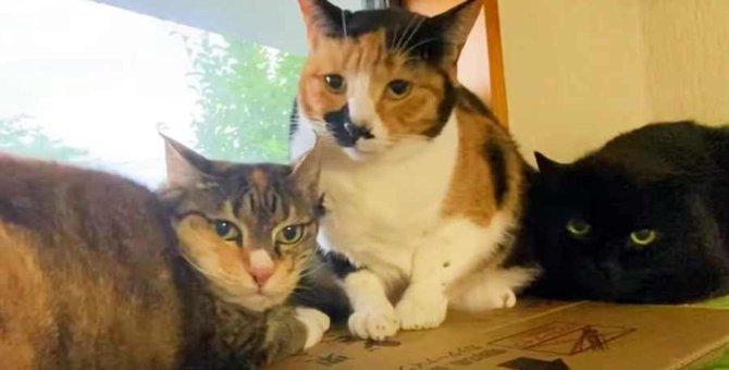飼い主さんが亡くなって残された9匹の猫たち。行く末は?Vol.3