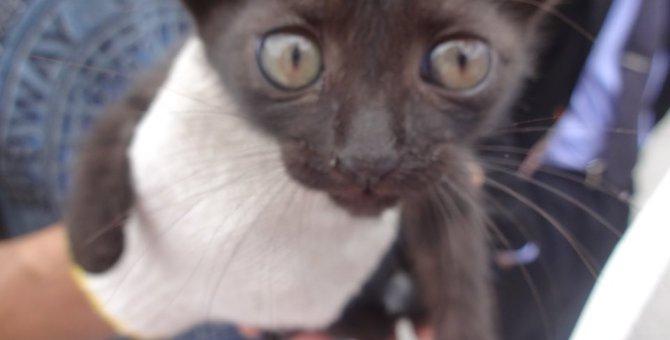 ごみ収集所の中から救出した子猫