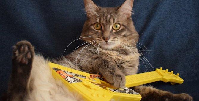 猫にも「絶対音感」はある?
