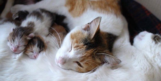 「僕の彼女助けてくれニャ」仲良し野良猫の彼女を家族としてお迎えした理由