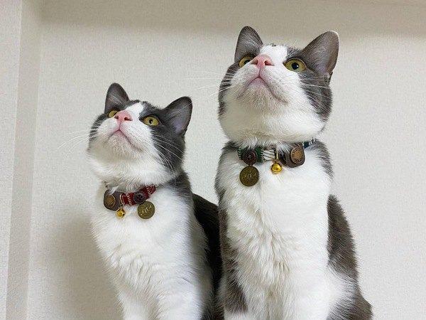 猫に首輪って必要?選ぶ際に注意すべきこと3つ