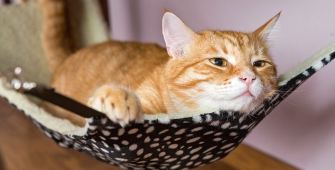 猫はベッドとハンモックどっちが好き?双方のメリットとは?
