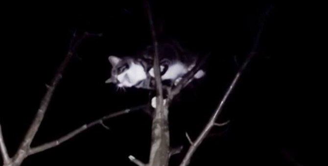 高木のてっぺんで怯える猫を助けて…!とても危険な夜間の救助作業