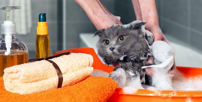 子猫にシャンプーをする際 3つの注意点