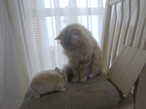 涙やけの猫ちゃんにおすすめ『ホリスティックレセピー』