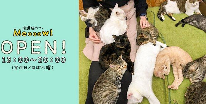五反田のおすすめ猫カフェ「Meooow!(ミャーーーオ!)」をご紹介