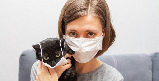 猫の飼い主がすべき新型コロナ対策5つ