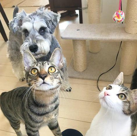 『犬1匹と猫2匹』保護猫をお迎えしたら絶妙な関係に