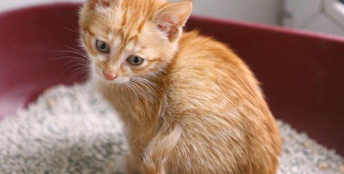 猫の「痛い」サインに気づいてあげる方法