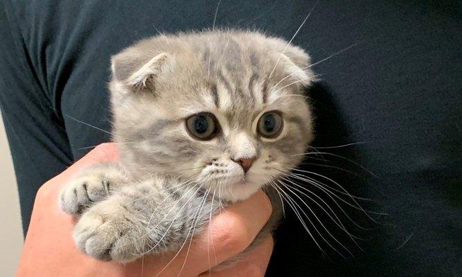 【話題】つめ切り…だと?マンチカン子猫さんの表情が秀逸♡