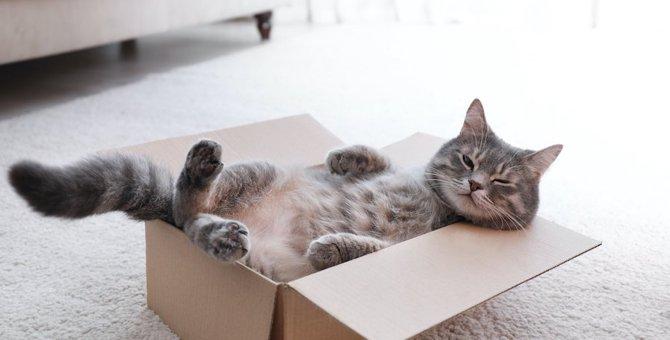 引越しは猫の大敵!?環境の変化で起こるストレスと対処法