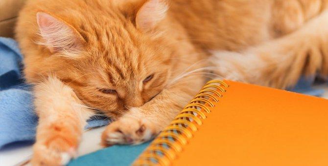 ごまかし上手な猫の「体調不良」に気付くべきポイント5つ