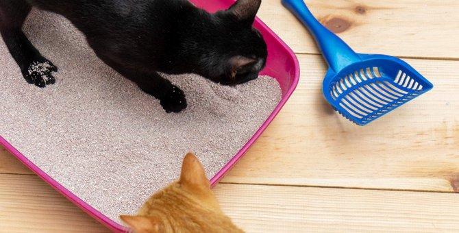 猫がトイレで『砂かけ』する3つの理由と注意点