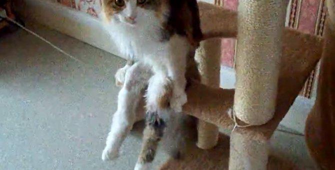 猫だって立派な乙女にゃの。座り方のクセが強いにゃんこ