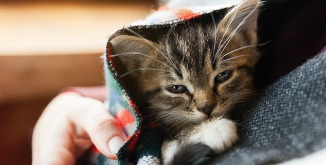猫の『突然死』を招く危険な病気5つ