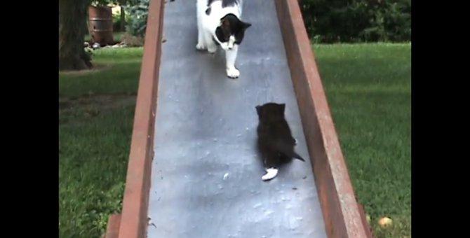「ままー!助けて~!」無限ループの予感…滑り台を滑る子猫ちゃんを助ける母猫