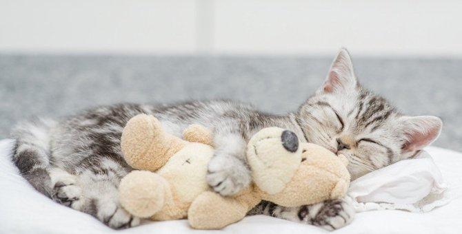 猫が一人占めしたい7つの物