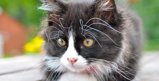 猫のヒゲが曲がる5つの理由