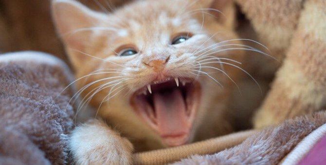 猫も歯が矯正ができる!一般的な費用や治療方法とは?