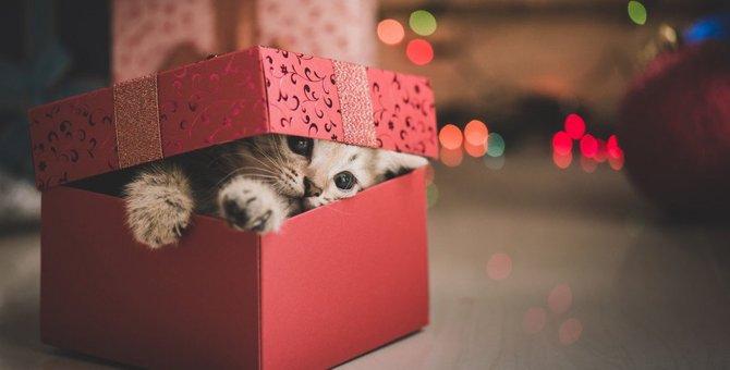 猫が『器用にこなせること』3選