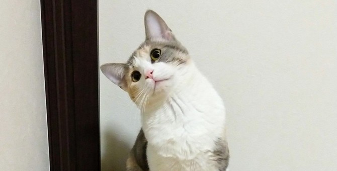 猫が思う『飼い主の萌えポイント』ランキングTOP5!愛猫があなたを好きなワケがわかるかも?