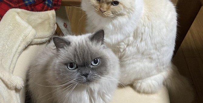 猫同士の『上下関係』を見分ける方法5選
