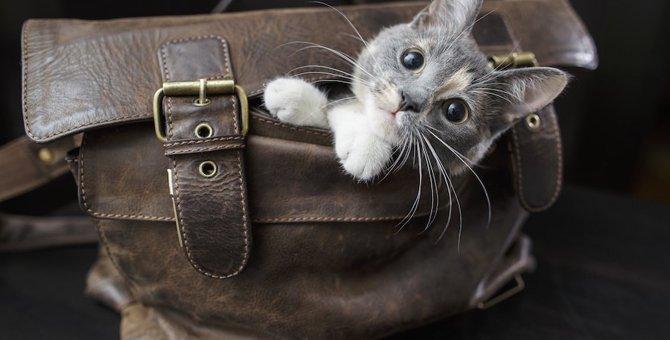 猫が飼い主のお出かけを察する5つの事