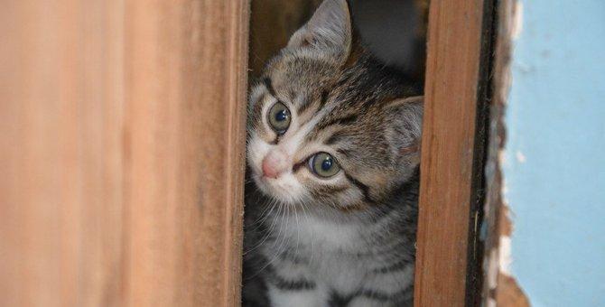 猫を飼うとゴキブリがいなくなる?
