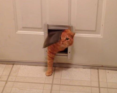 「うーん…出れニャイ!」太った猫ちゃん、キャットドアに一苦労!