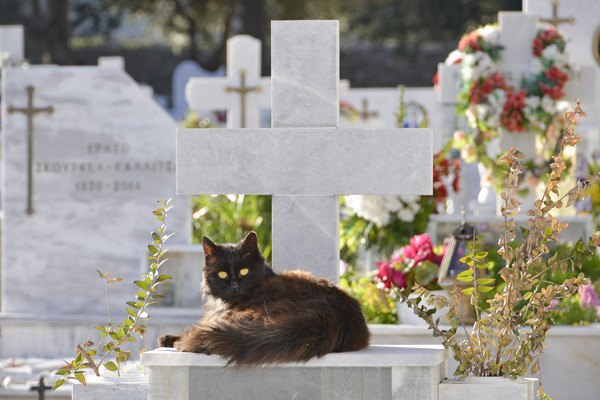 愛猫が死んだとき...最期を看取ってから行うべき4つのこと