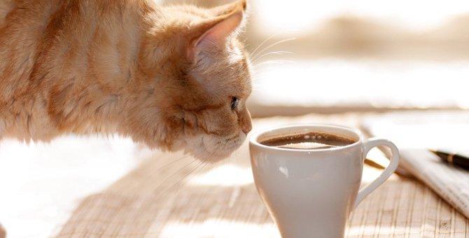 猫カフェってどんなところ?