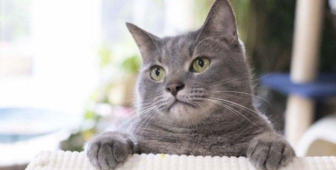 人間とはちょっと違う?猫のわかりづらい『愛情表現』6選