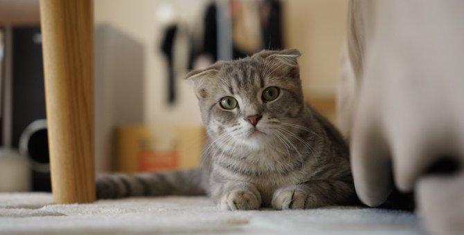 猫が急に「そわそわ」する8つの理由
