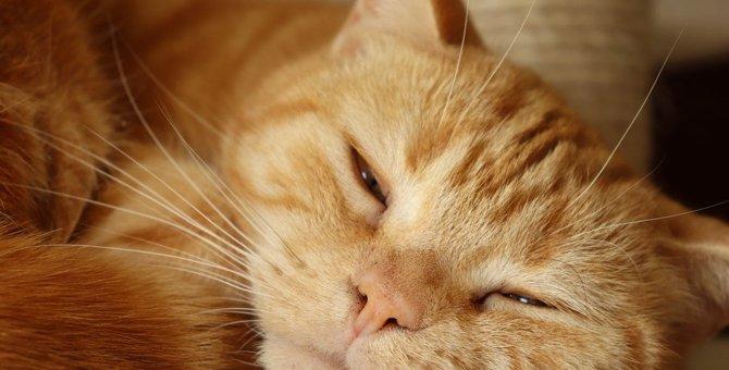 猫に最も多い心筋症「肥大型心筋症」が怖い。発見のカギは呼吸の仕方