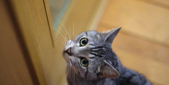 『発情期の猫』への絶対禁止行為2つ!適切なケア方法とは?