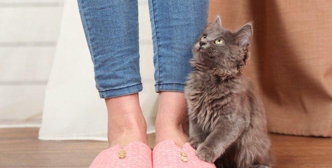 猫がわざと飼い主の足を踏む6つの心理