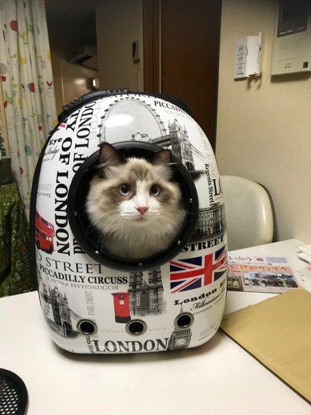 猫がキャリーケースに入らない時の対策4つ
