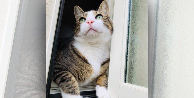 LAYLAの12猫占い【9/14~9/20】のあなたと猫ちゃんの運勢