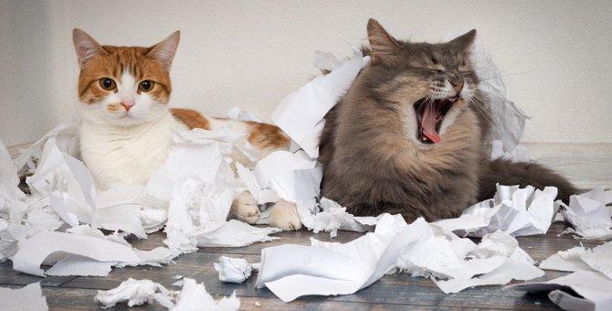 猫が『反省の気持ち』を伝えている時の仕草・行動5つ