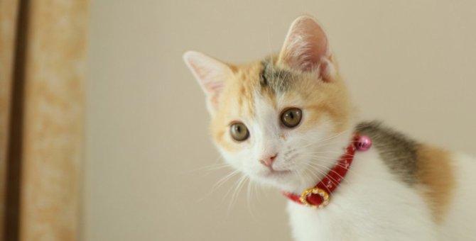 猫につけちゃダメな『首輪』の特徴4つ!危険な事故の予防策とは?