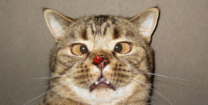 【人の数万〜数十万倍の嗅覚】猫が苦手なニオイに気をつけよう