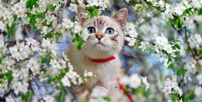 猫飼いさん気を付けて!春の行事で起こる事故4つ